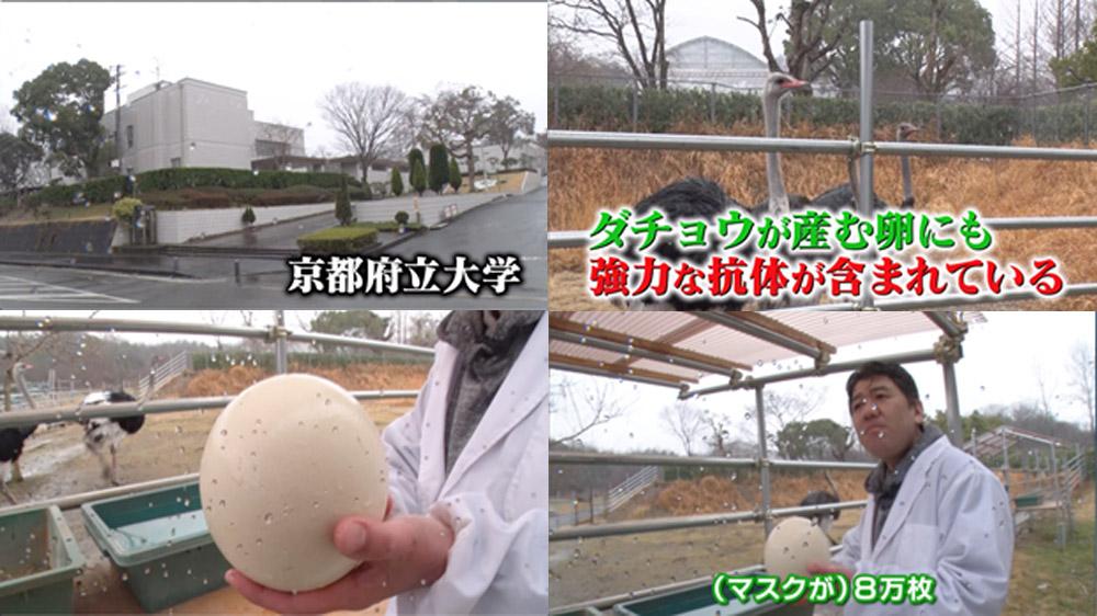 ダチョウ 卵 マスク